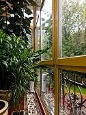 комнатные растения.jpg