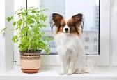 растения для дома.jpg