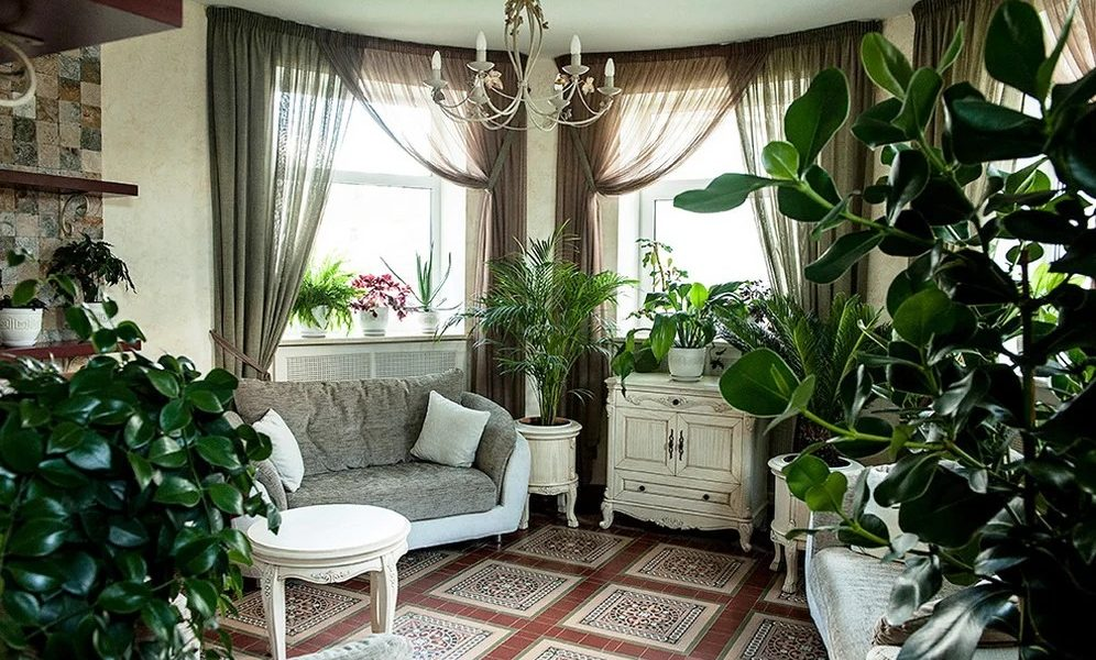 houseplants at home-7.jpg